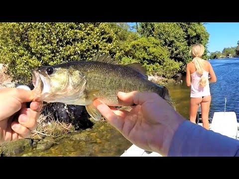 Florida Freshwater Fishing For Largemouth Bass With Topwaters & Swimbaits