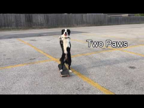 Dog Skateboarding like Human