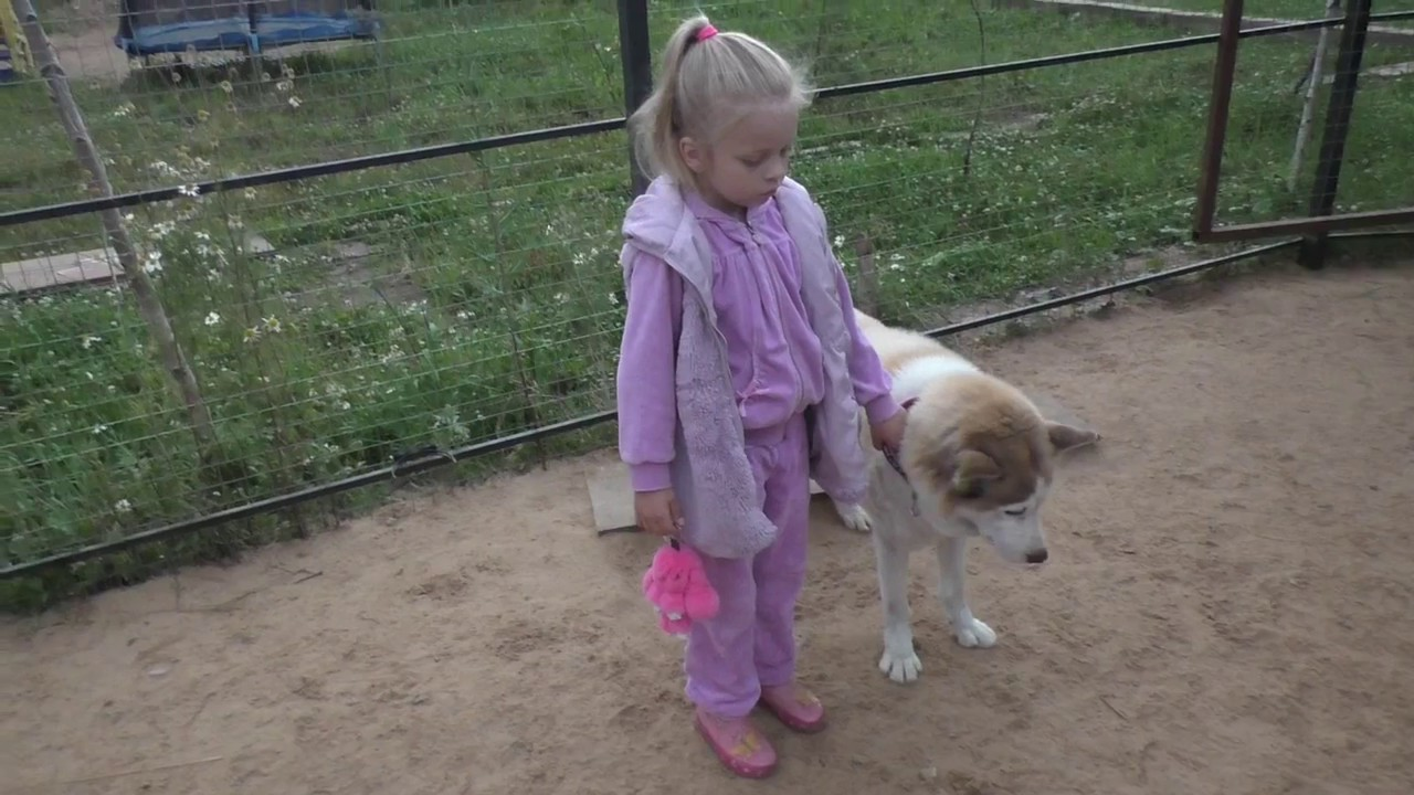 Продаётся щенок хаски. - YouTube