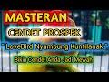 Masteran Cendet Prospek  Lovebird Nyambung Kuntilanak  Bikin Cendet Anda Jadi Mewah  Mp3 - Mp4 Download