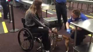 Psych Service Dog Training Blog: Part 24. Quick Clip Of Tsa Security Search. Mar 6 2015
