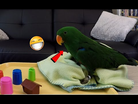 Nouveaux jeux pour mon perroquet
