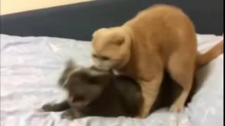 Кот кричит