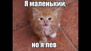 Веселые картинки Кошки смешные видео про кошек