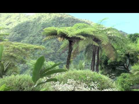 The Garden of Eden - Montreal Garden - St. Vincent and The Grenadines
