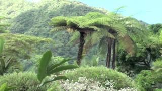 The Garden of Eden - Montreal Garden - St. Vincent and The Grenadines