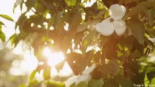 Sleep Piano Music | Relaxing Background Music | Meditation, Relaxation, Spa, Massage & Yo  Part 518