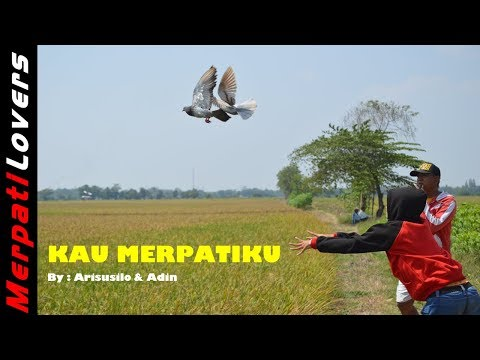 Download Lagu Backsound Merpati Lovers: Kau Merpatiku
