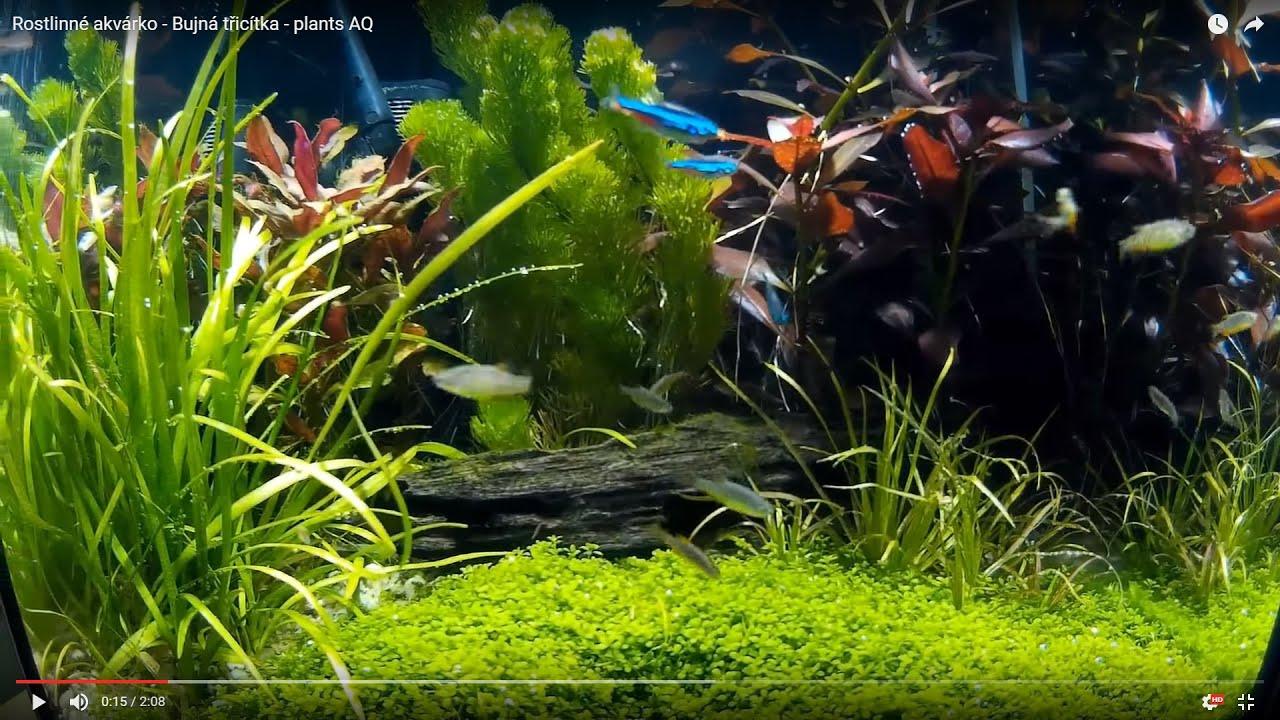 Rostlinné NANO akvárium Bujná třictka plants AQ