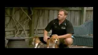 Termite Inspection Company Gold Coast | Termite Inspections Service