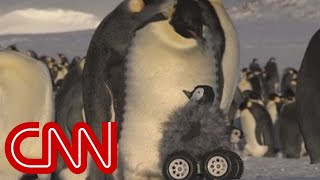 Repeat youtube video Robot penguin meets real penguin in cutest experiment ever