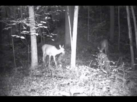 primos red spot vs deer cane black magic vs sugarbeetcrushblock part 1