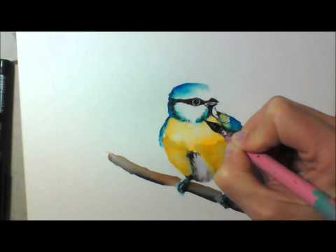 Blaumeise - Watercolor - Speed Painting