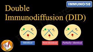 Double immunodiffusion (Ouchterlony Double Diffusion) (FL-Immuno/58)