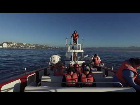 Experience the ocean life: Ocean Conservation