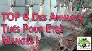 TOP 8 Des Animaux Tués Pour Etre Mangés !