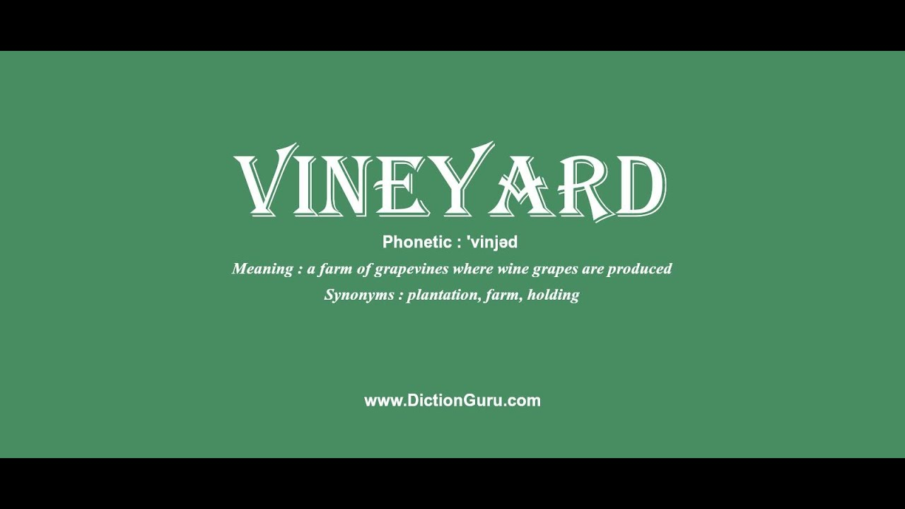 Veeyard Meaning: Vineyard: Pronounce Vineyard With Meaning, Phonetic