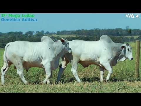 LOTE 94 - DUPLO - REMC A 1880, REMP 810 - 17º Mega Leilão Genética Aditiva 2020