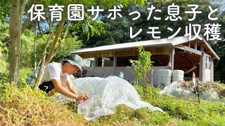 保育園サボった次男と畑で過ごす。枯れそうな苗に日除け【のらしごとシリーズ#1】