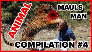 Animals MAUL Humans Compilation #3 (2018)