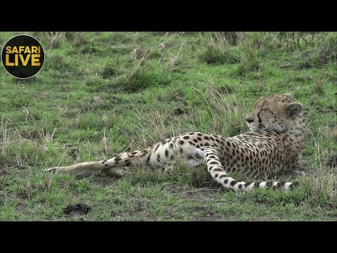 safariLIVE - Sunset Safari - September 13, 2018