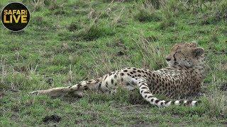 safariLIVE - Sunset Safari - September 13, 2018