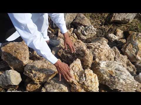 Organic agricultural in Pakistan Fazal Hussain solangi