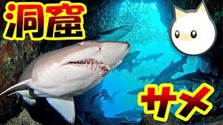 巨大洞窟サメにリベンジ!! 海底洞窟にひそむ巨大サメを釣る!? ネコたんのほのぼのフィッシング!! - Cat Goes Fishing2 実況プレイ #13 thumbnail