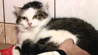 Jak Legnica opiekuje się bezdomnymi zwierzętami?