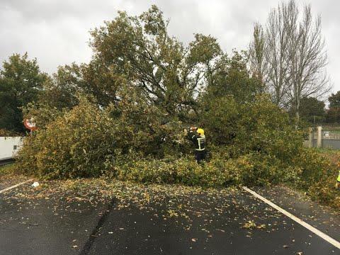 Cae un árbol y bloquea la N-525 en Xinzo