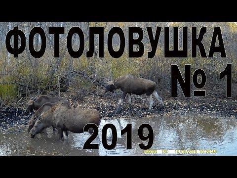 Фотоловушка №1  2019