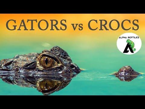 Alligators vs Crocodiles! thumbnail