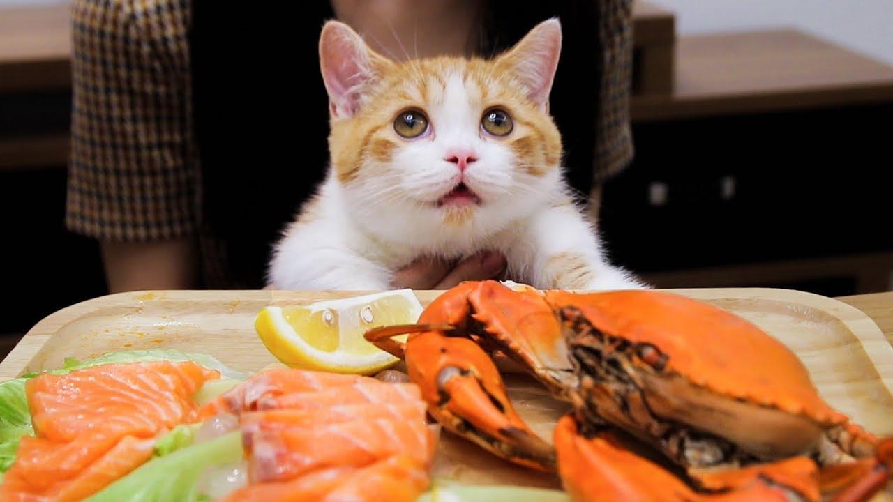 橘猫吃播又来吃海鲜了-确认过眼神-是家里有矿的猫