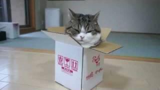 Кот Мару король коробок(Японский кот Мару любит коробки., 2011-06-22T00:11:35.000Z)