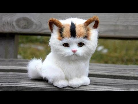 The Secret Life of Cats - National Geographic Documentary