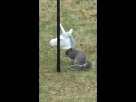 Squirrel In Unicorn Feeder Youtube