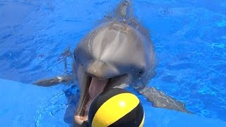 Playing Dolphins--Marineland Mallorca--Dolphin Encounter