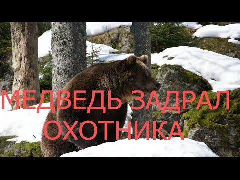Медведь задрал охотника, а выжившему грозит 250000 рублей штрафа.