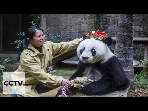 World's oldest panda Basi attracts hundreds of tourists during 7-day holiday