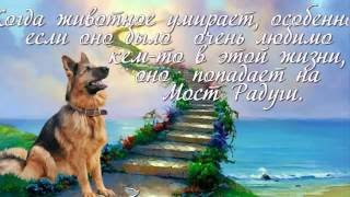 Любимым собакам посвящается
