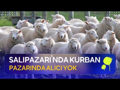SALIPAZARI'NDA KURBAN PAZARINDA ALICI YOK.