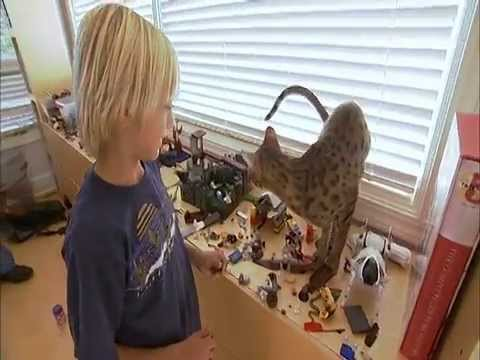 Savannah cat 101