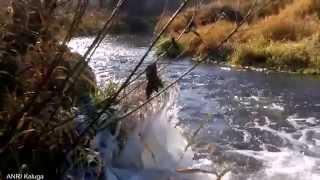 Река Калужка под Калугой (ноябрь 2014)