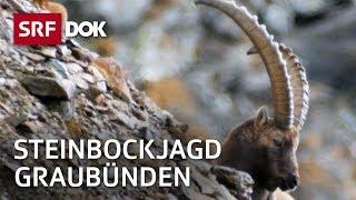 Steinbockjagd in Graubünden: Herr Jäger und sein Bock