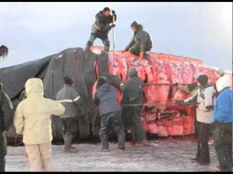 Our Alaska: Bowhead whale hunt