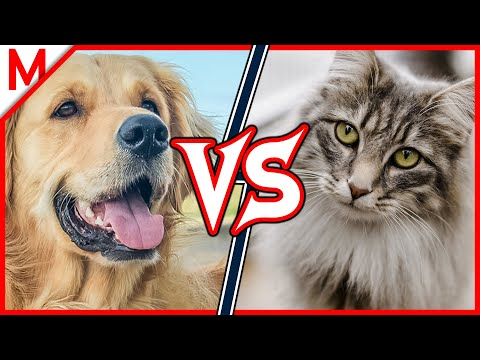 Dog vs Cat | ANIMAL BATTLE (+ Gorilla vs Orangutan winner)