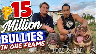 15Million IMPORT EXOTIC BULLY DOGS | ANU ANG PEDIGREE NILA? | SAM WALASTIK