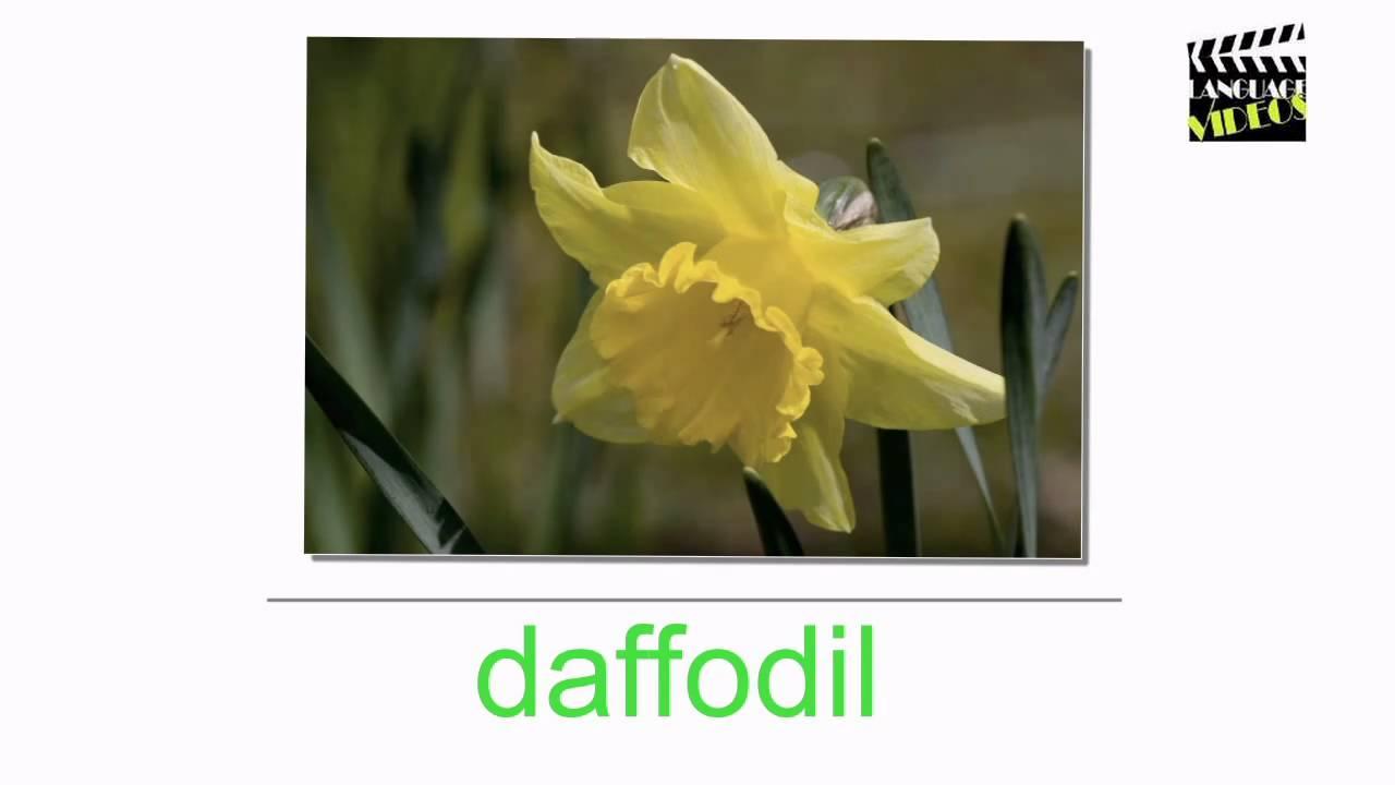Engleza Pentru Incepatori Flori Youtube
