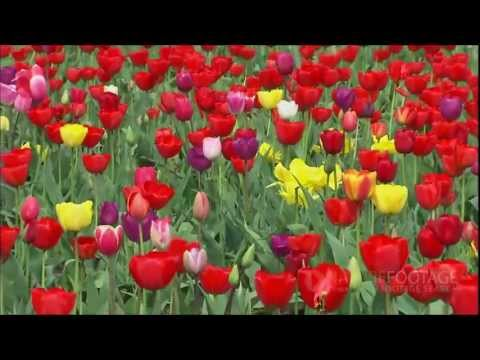 Nature Footage: Plants and Flowers Time lapse and Beauty Shots