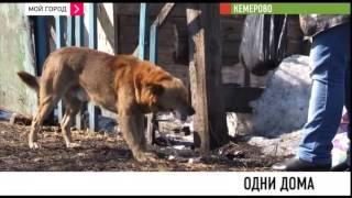 Переселившись в новое жилье кемеровчане оставили в бараке кошек и собак